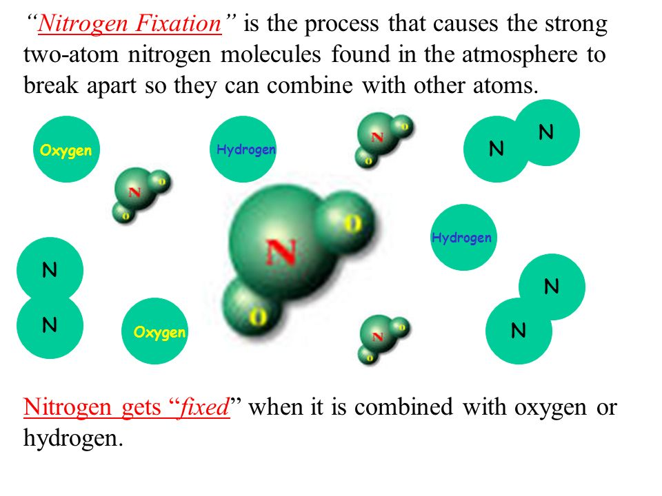 Nitrogen Fixation is the process that causes the strong two-atom nitrogen molecules found in the atmosphere to break apart so they can combine with ot