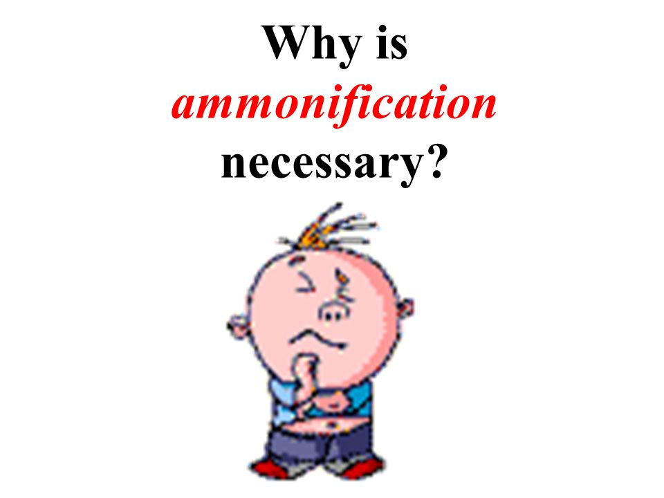 Why is ammonification necessary?