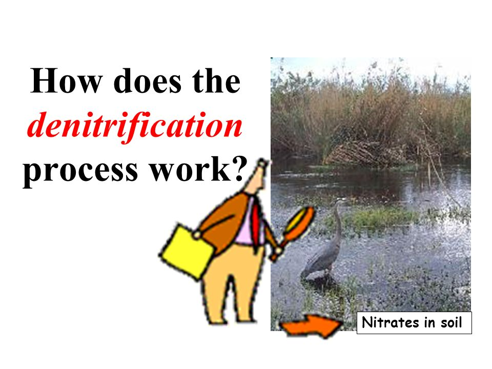 How does the denitrification process work? Nitrates in soil