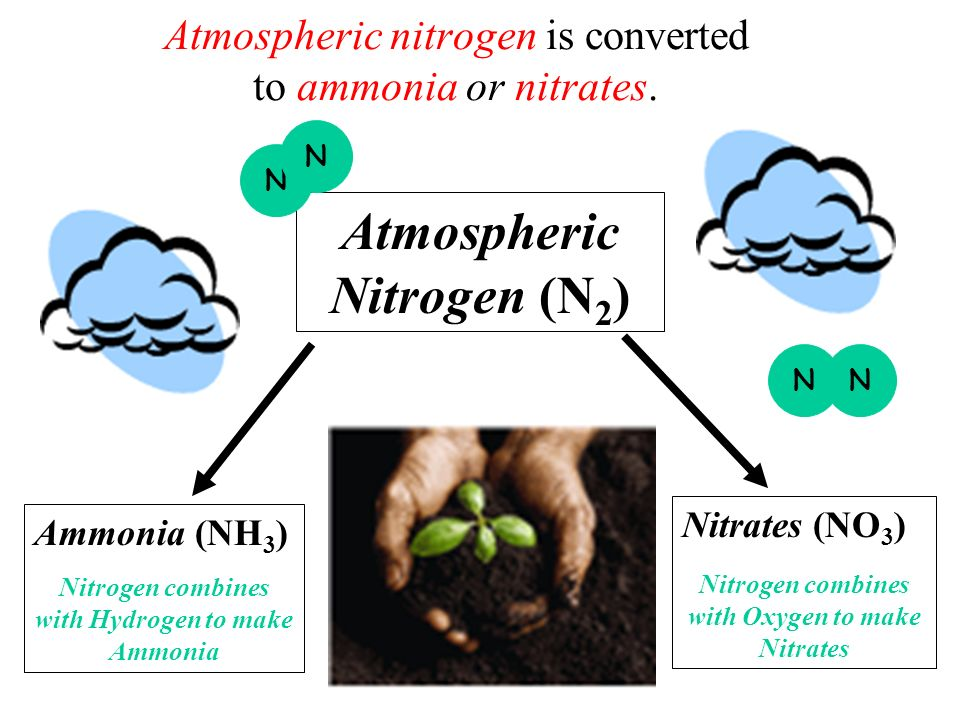 Atmospheric nitrogen is converted to ammonia or nitrates. Ammonia (NH 3 ) Nitrogen combines with Hydrogen to make Ammonia Nitrates (NO 3 ) Nitrogen co