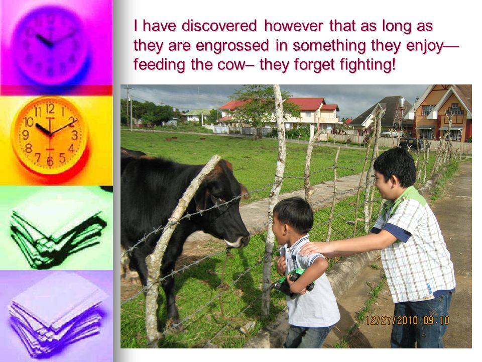 I have discovered however that as long as they are engrossed in something they enjoy feeding the cow– they forget fighting!