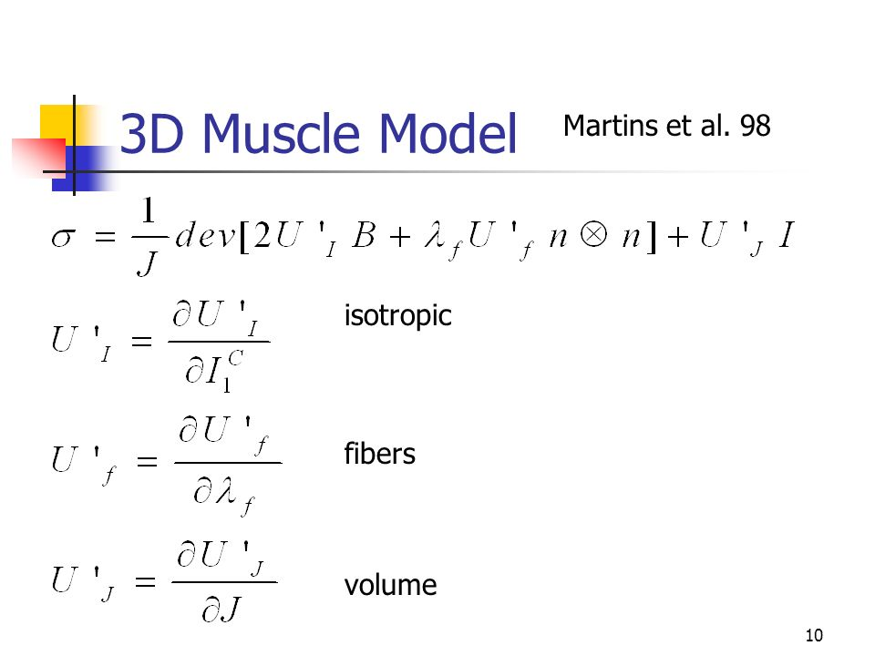 10 3D Muscle Model isotropic fibers volume Martins et al. 98