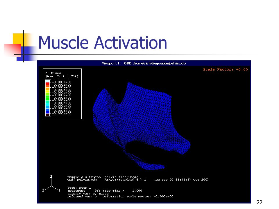 22 Muscle Activation