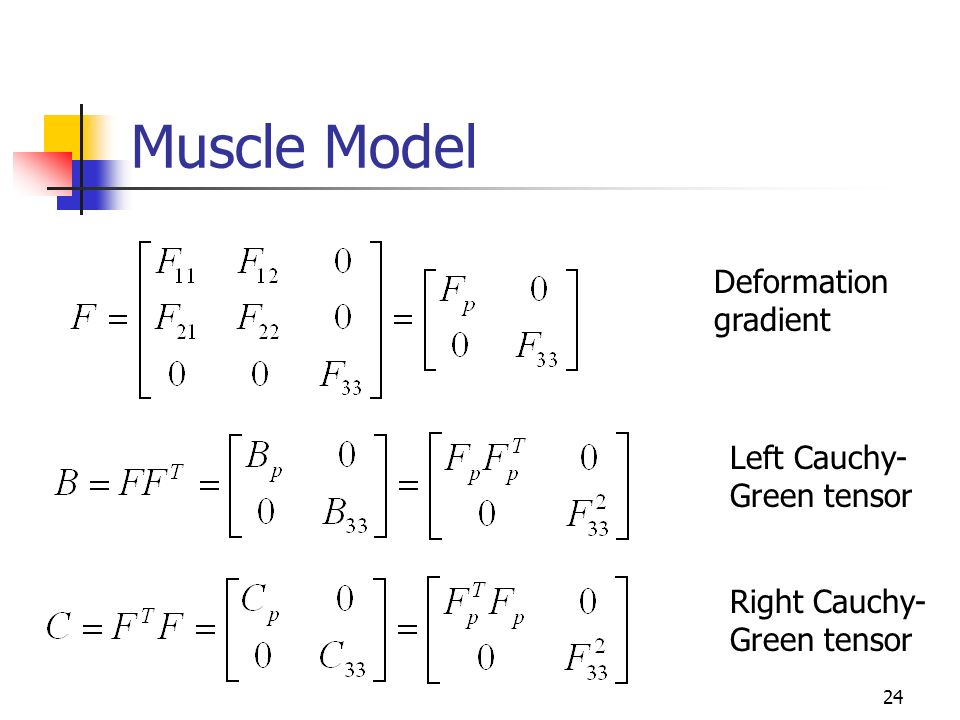 24 Muscle Model Deformation gradient Left Cauchy- Green tensor Right Cauchy- Green tensor
