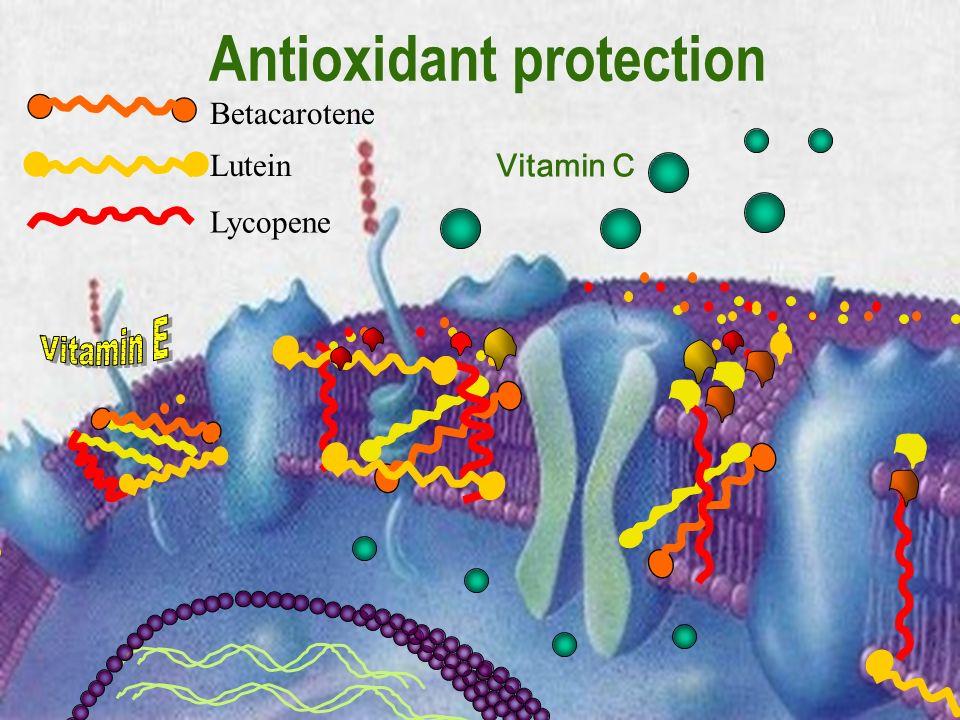 11 Antioxidant protection Vitamin C Lutein Lycopene Betacarotene