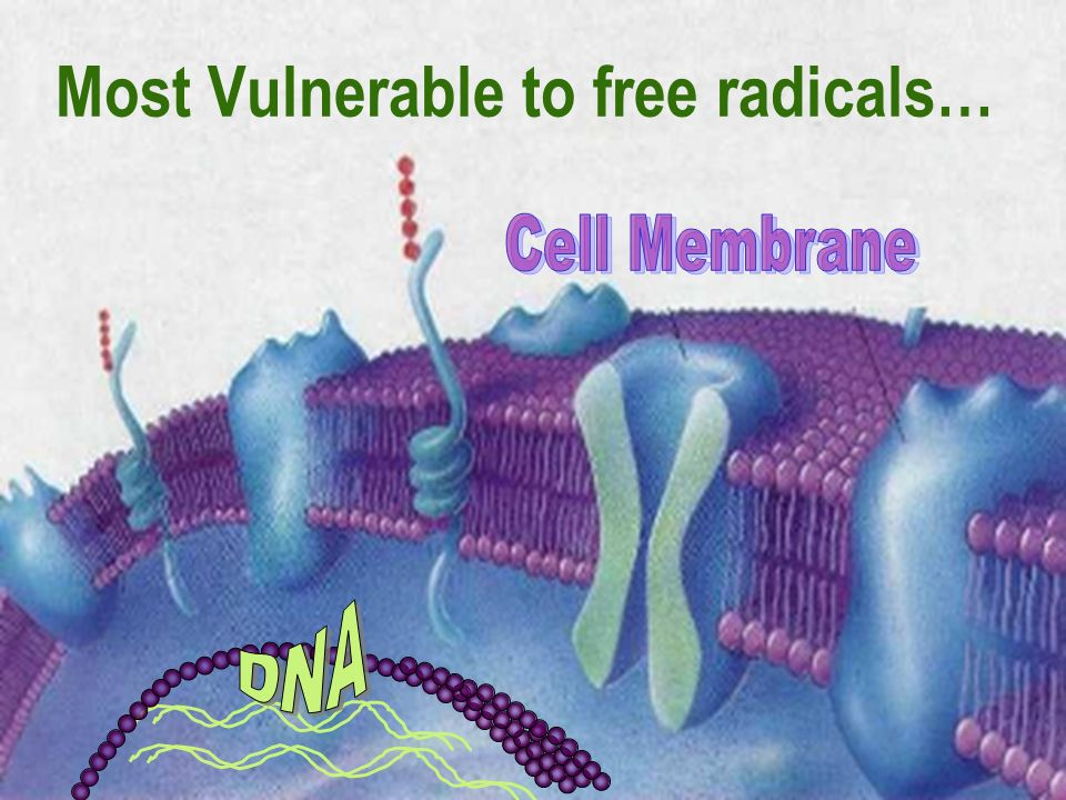 6 Most Vulnerable to free radicals…