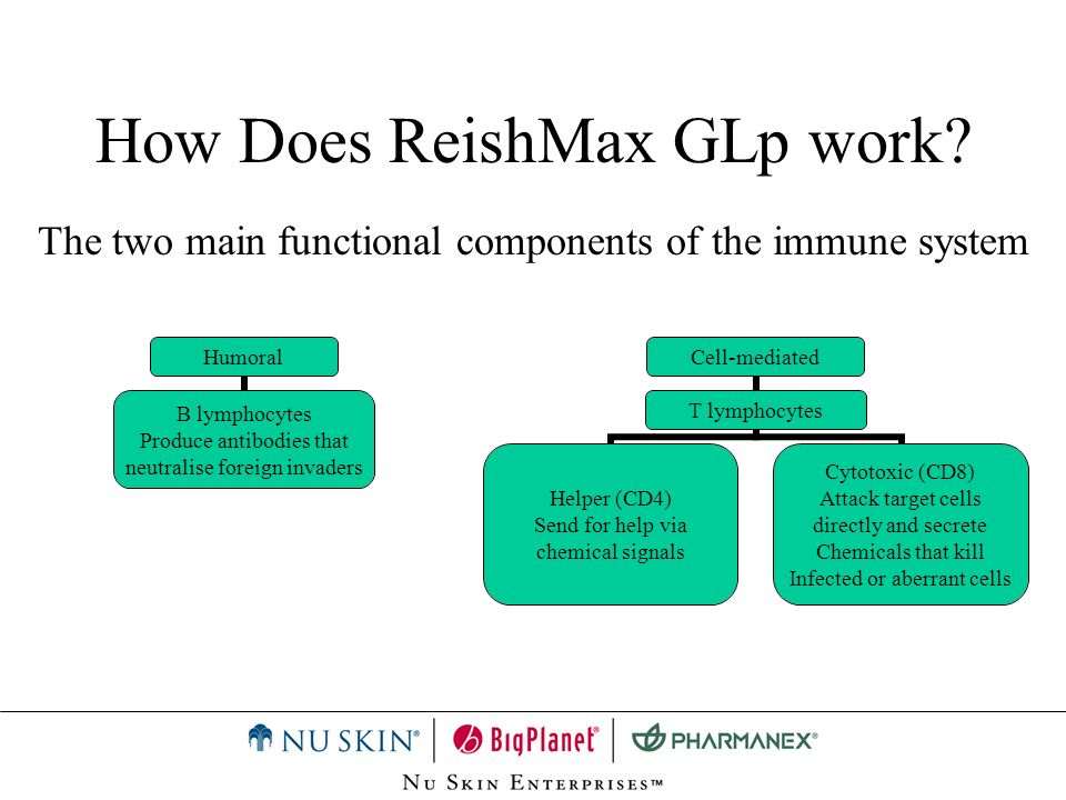 How Does ReishMax GLp work? Humoral B lymphocytes Produce antibodies that neutralise foreign invaders Cell-mediated T lymphocytes Helper (CD4) Send fo