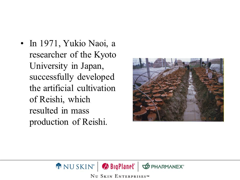 In 1971, Yukio Naoi, a researcher of the Kyoto University in Japan, successfully developed the artificial cultivation of Reishi, which resulted in mas