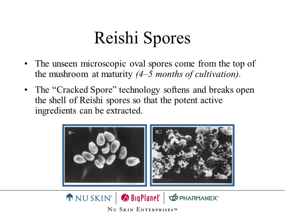 Reishi Spores The unseen microscopic oval spores come from the top of the mushroom at maturity (4–5 months of cultivation). The Cracked Spore technolo