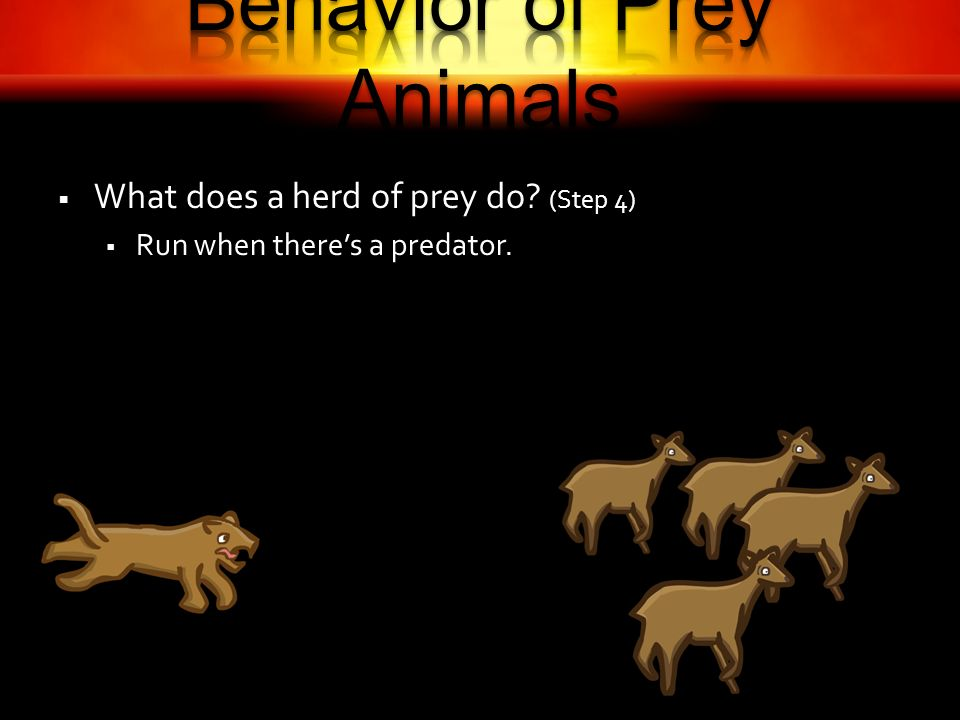 What does a herd of prey do? (Step 4) Run when theres a predator.