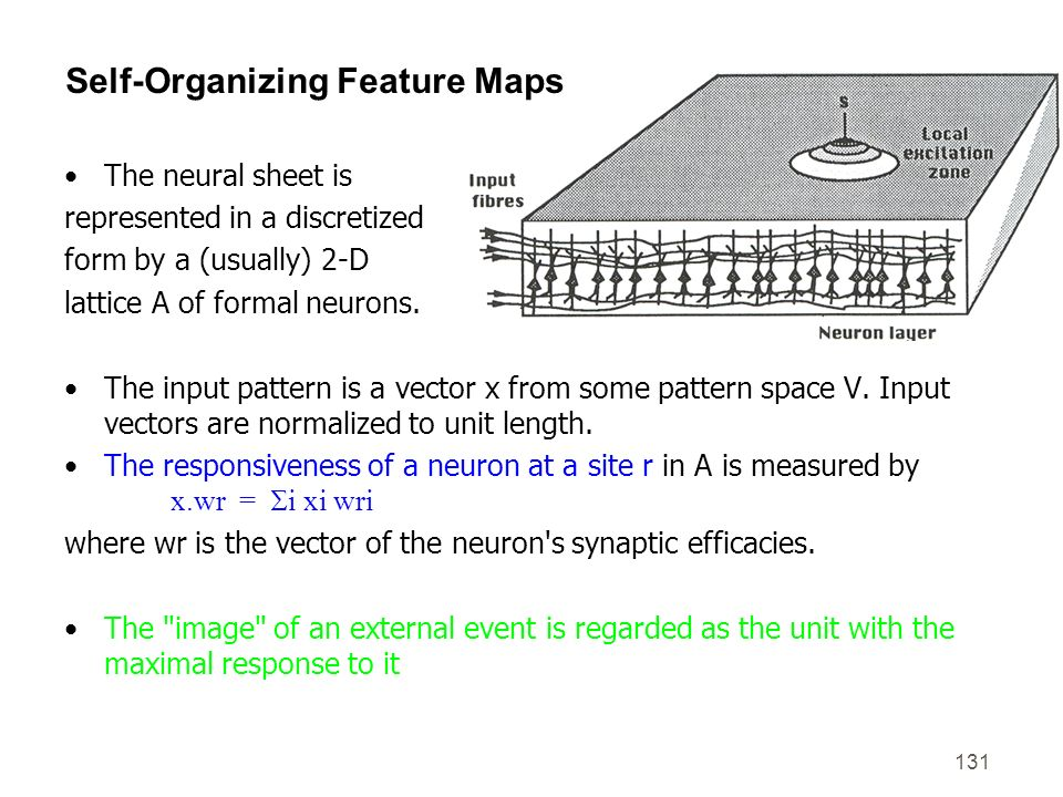 131 Self-Organizing Feature Maps The neural sheet is represented in a discretized form by a (usually) 2-D lattice A of formal neurons. The input patte