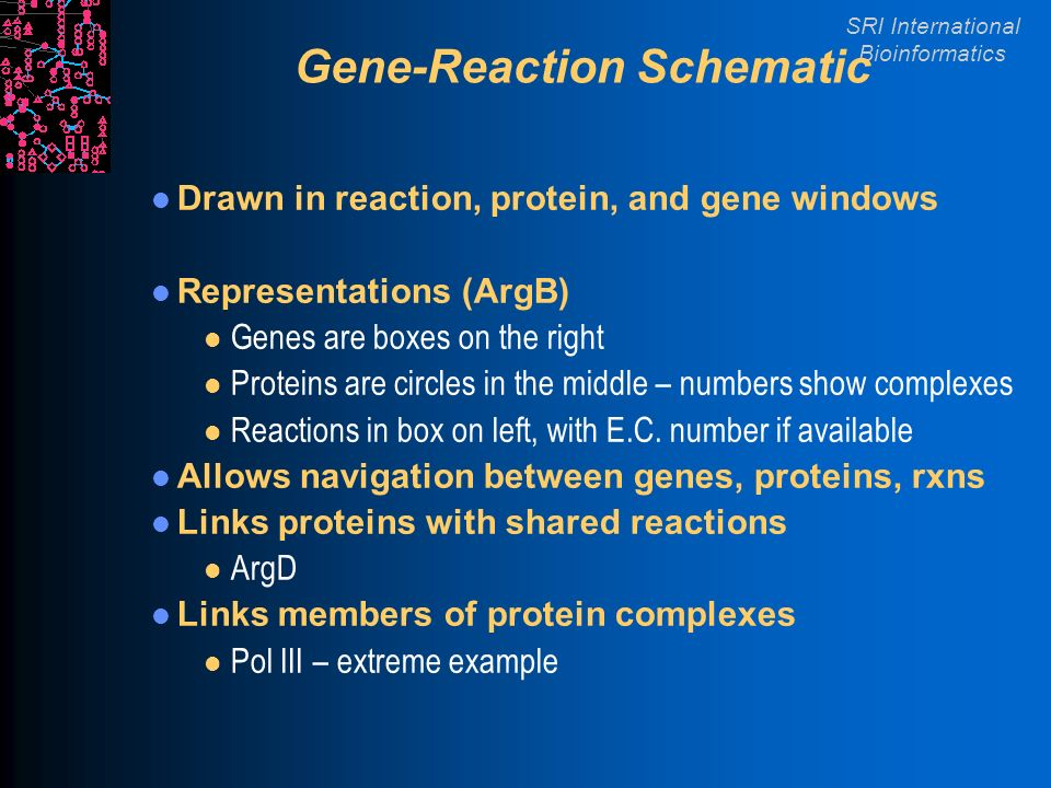 SRI International Bioinformatics Gene-Reaction Schematic Drawn in reaction, protein, and gene windows Representations (ArgB) l Genes are boxes on the right l Proteins are circles in the middle – numbers show complexes l Reactions in box on left, with E.C.