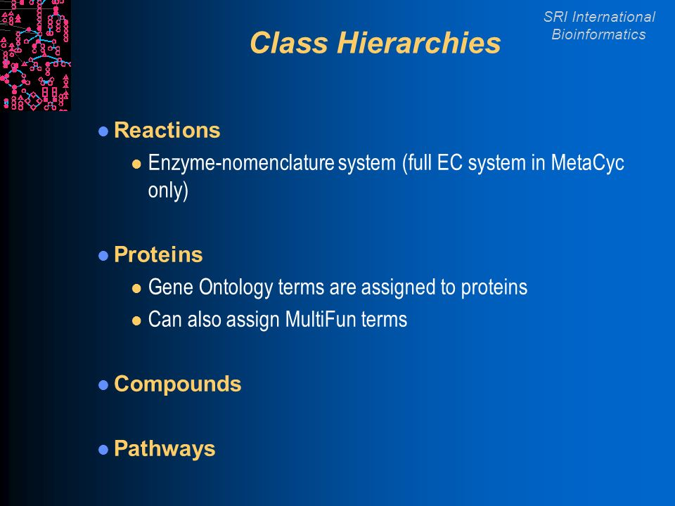 SRI International Bioinformatics Class Hierarchies Reactions l Enzyme-nomenclature system (full EC system in MetaCyc only) Proteins l Gene Ontology terms are assigned to proteins l Can also assign MultiFun terms Compounds Pathways