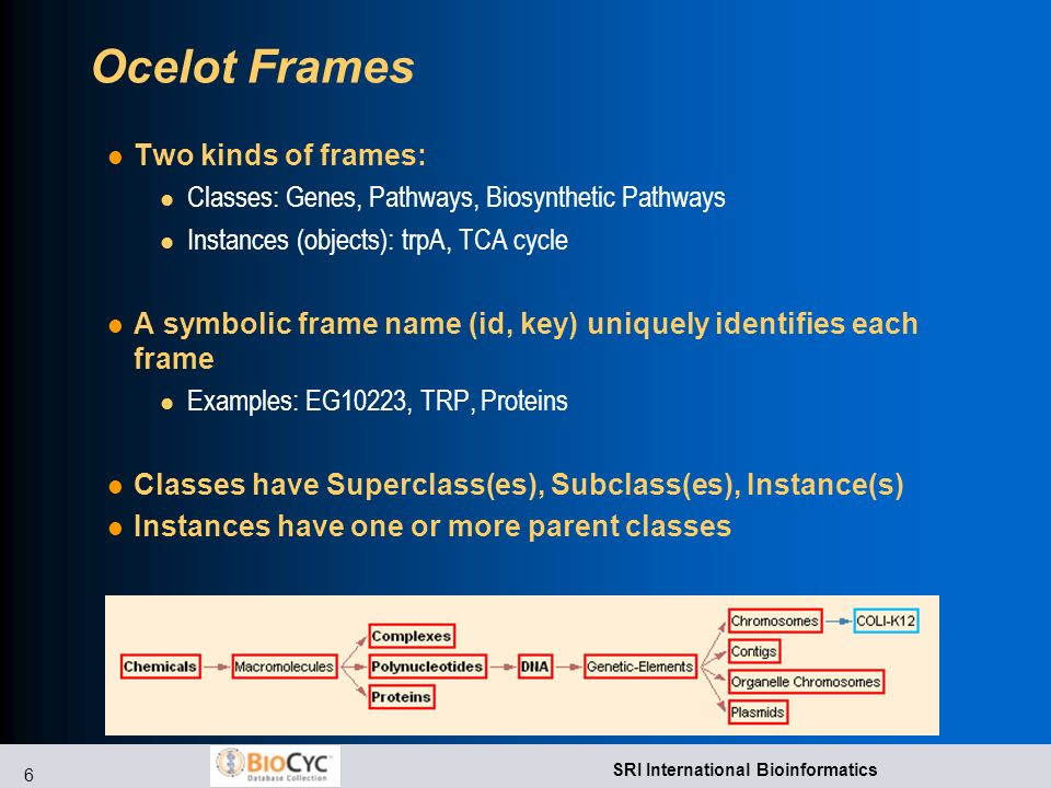 6 SRI International Bioinformatics Ocelot Frames Two kinds of frames: l Classes: Genes, Pathways, Biosynthetic Pathways l Instances (objects): trpA, TCA cycle A symbolic frame name (id, key) uniquely identifies each frame l Examples: EG10223, TRP, Proteins Classes have Superclass(es), Subclass(es), Instance(s) Instances have one or more parent classes