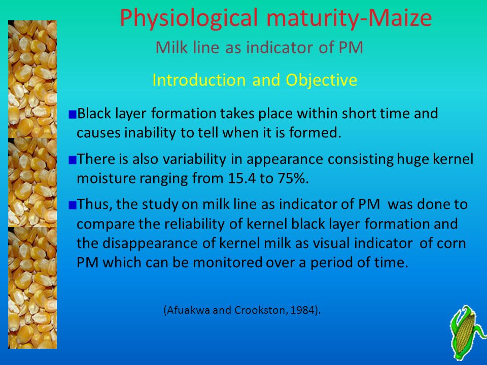 Physiological maturity-Maize Milk line as indicator of PM Introduction and Objective Black layer formation takes place within short time and causes in