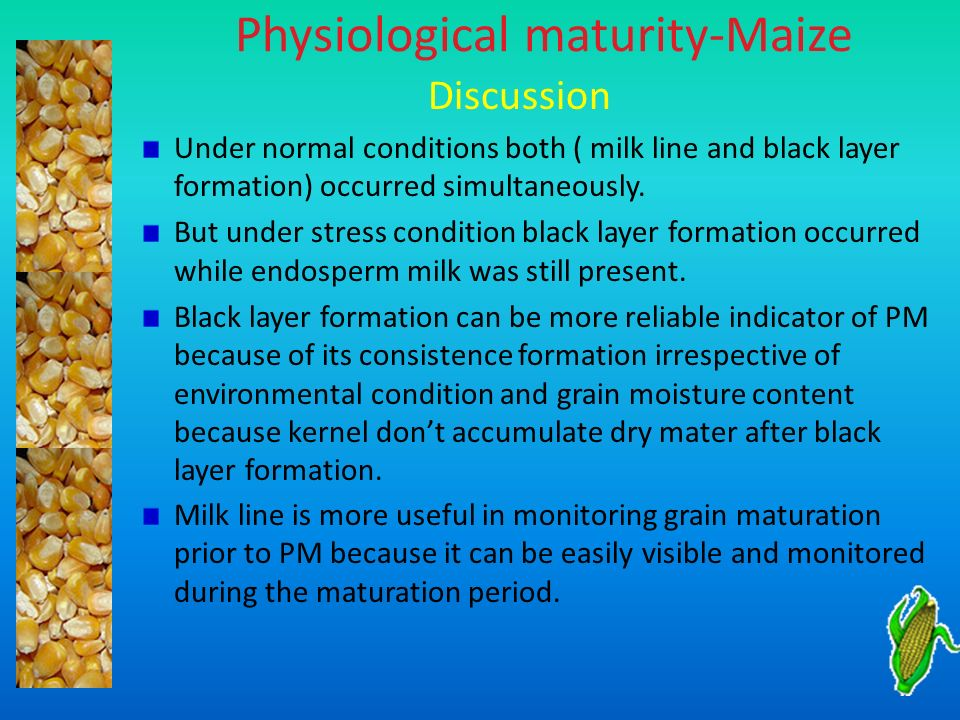Physiological maturity-Maize Discussion Under normal conditions both ( milk line and black layer formation) occurred simultaneously. But under stress