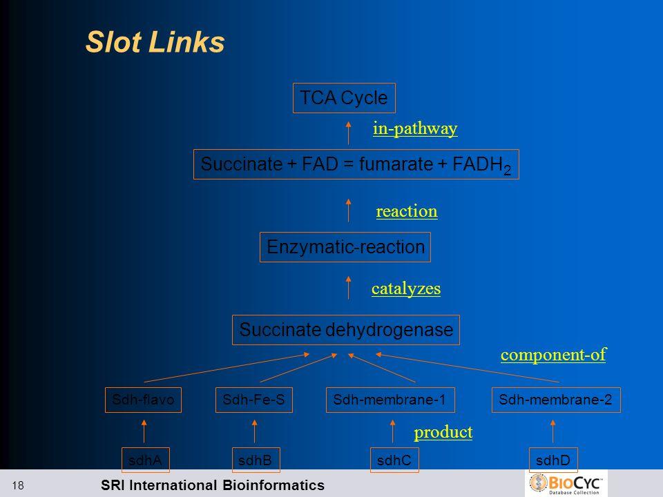 SRI International Bioinformatics 18 Slot Links Sdh-flavoSdh-Fe-SSdh-membrane-1Sdh-membrane-2 sdhA sdhB sdhCsdhD Succinate + FAD = fumarate + FADH 2 En