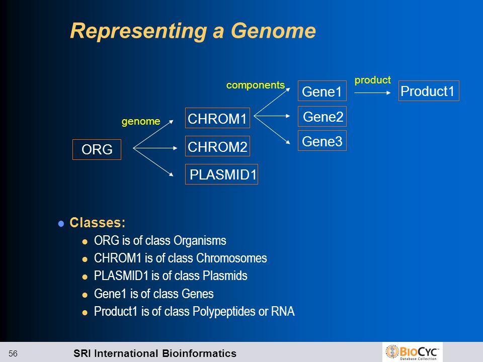 SRI International Bioinformatics 56 Representing a Genome Classes: l ORG is of class Organisms l CHROM1 is of class Chromosomes l PLASMID1 is of class