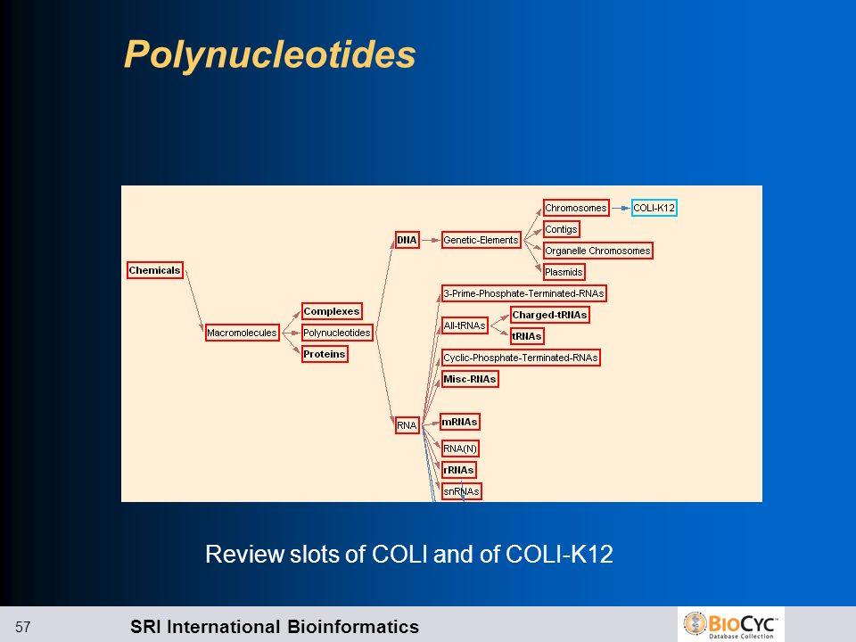 SRI International Bioinformatics 57 Polynucleotides Review slots of COLI and of COLI-K12