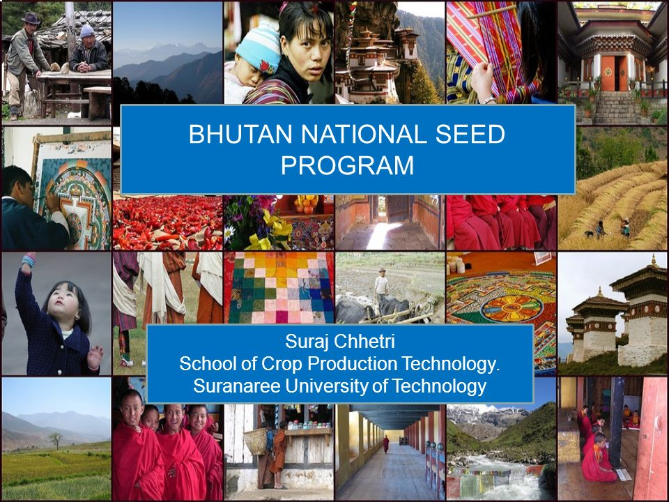 BHUTAN NATIONAL SEED PROGRAM Suraj Chhetri School of Crop Production Technology. Suranaree University of Technology