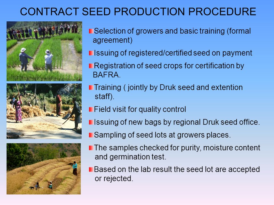 CONTRACT SEED PRODUCTION PROCEDURE Selection of growers and basic training (formal agreement) Issuing of registered/certified seed on payment Registra