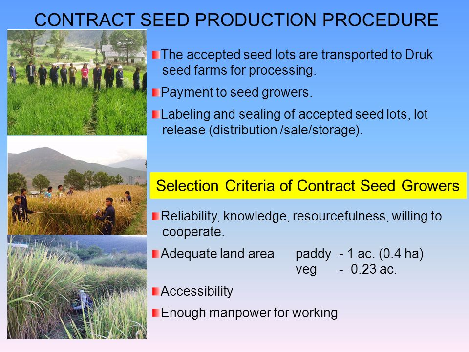 The accepted seed lots are transported to Druk seed farms for processing. Payment to seed growers. Labeling and sealing of accepted seed lots, lot rel