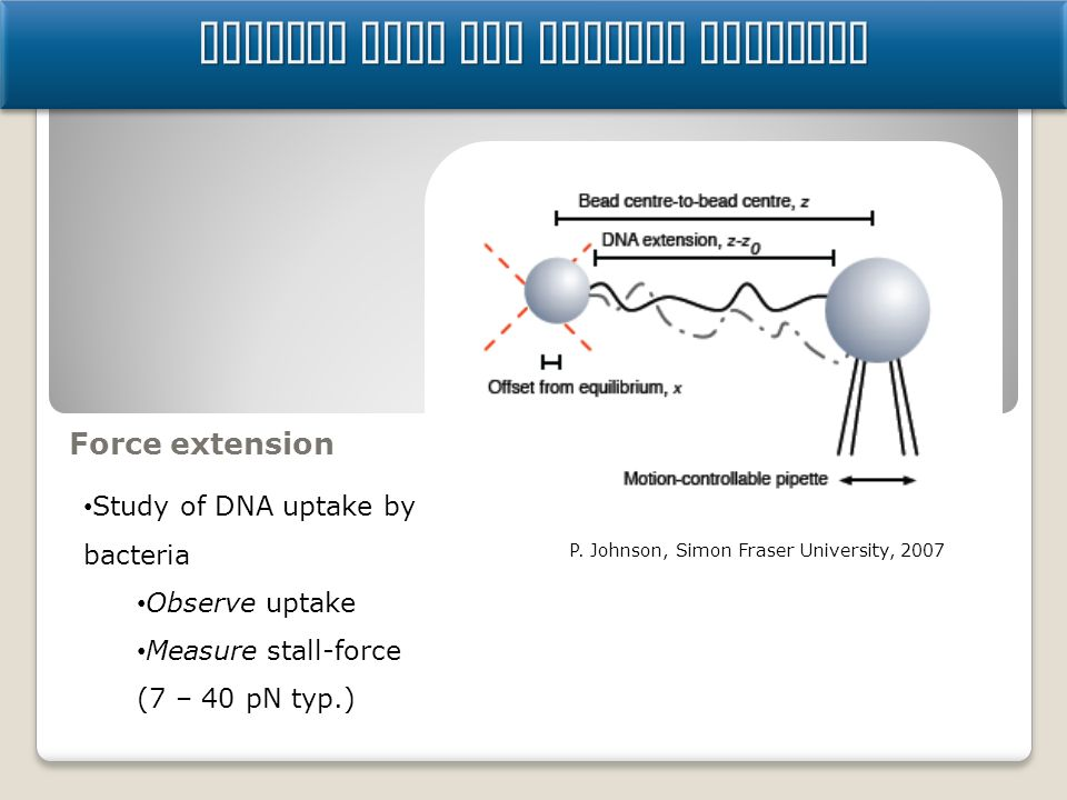Science Case for Optical Tweezers Force extension Study of DNA uptake by bacteria Observe uptake Measure stall-force (7 – 40 pN typ.) P. Johnson, Simo