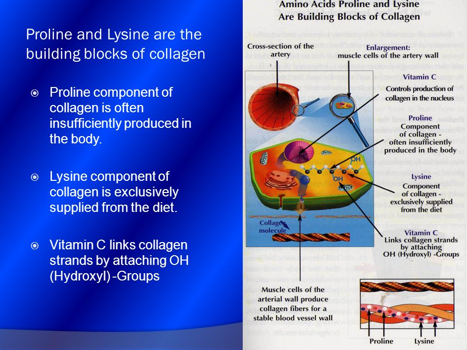 Proline and Lysine are the building blocks of collagen Proline component of collagen is often insufficiently produced in the body. Lysine component of