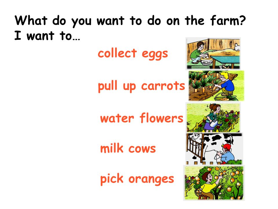 What do you want to do on the farm? I want to… milk cows pull up carrots water flowers collect eggs pick oranges