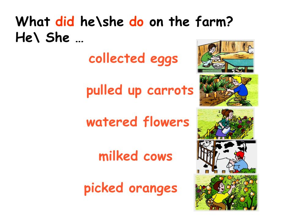 pulled up carrots watered trees collected eggs milked cows picked oranges