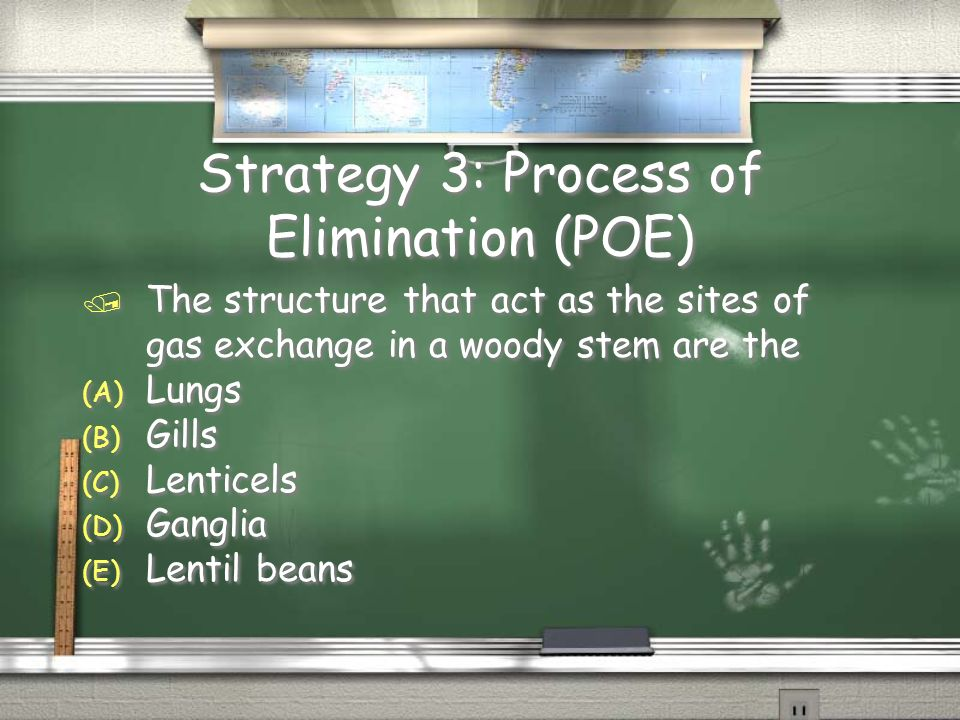 Strategy 3: Process of Elimination (POE) / The structure that act as the sites of gas exchange in a woody stem are the (A) Lungs (B) Gills (C) Lentice