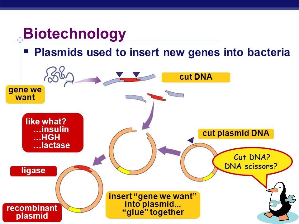 AP Biology How can plasmids help us? A way to get genes into bacteria easily insert new gene into plasmid insert plasmid into bacteria = vector bacter