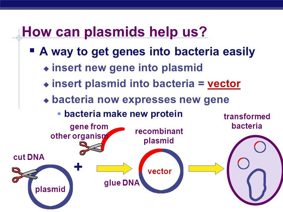 AP Biology Plasmids Small supplemental circles of DNA 5000 - 20,000 base pairs self-replicating carry extra genes 2-30 genes genes for antibiotic resi