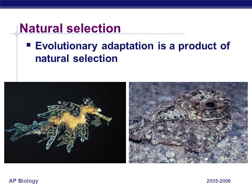 AP Biology 2005-2006 Natural selection Evolutionary adaptation is a product of natural selection