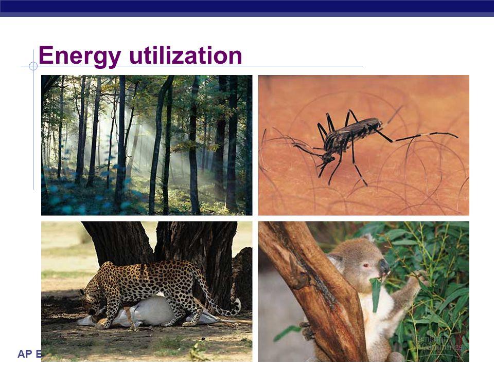 AP Biology 2005-2006 Energy utilization