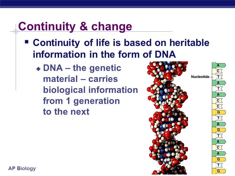 AP Biology 2005-2006 Continuity & change Continuity of life is based on heritable information in the form of DNA DNA – the genetic material – carries