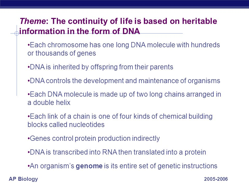 AP Biology 2005-2006 Theme: The continuity of life is based on heritable information in the form of DNA Each chromosome has one long DNA molecule with