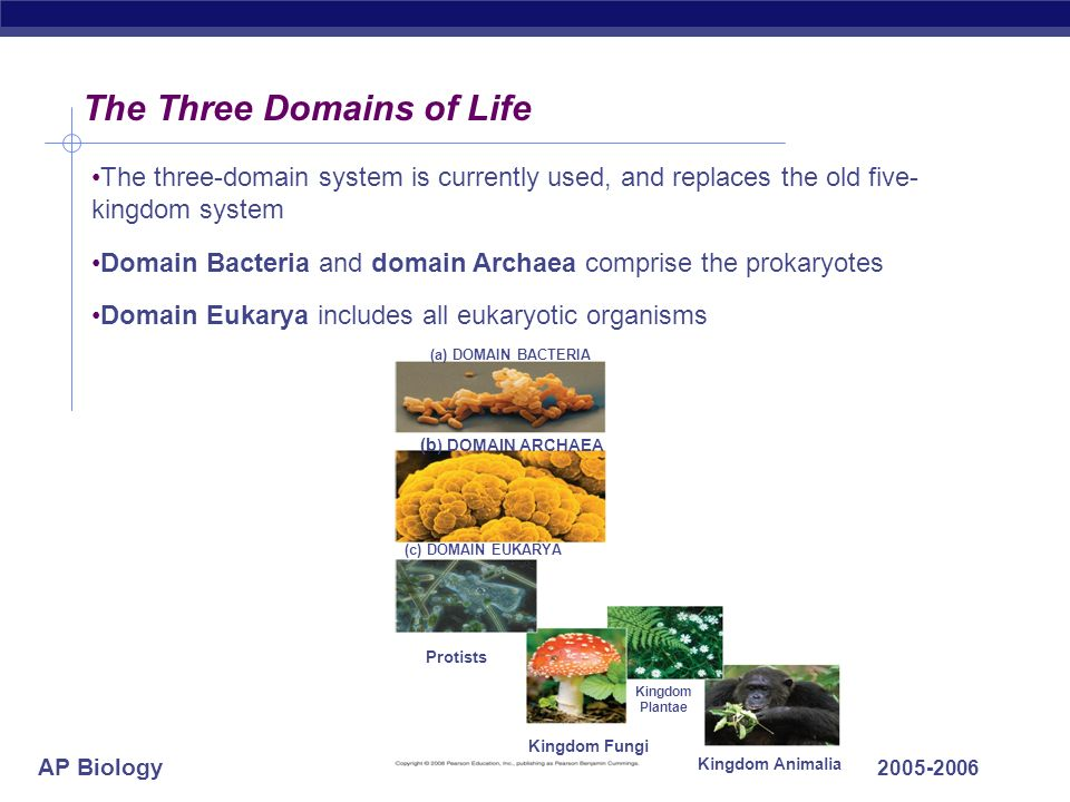 AP Biology 2005-2006 The Three Domains of Life The three-domain system is currently used, and replaces the old five- kingdom system Domain Bacteria an