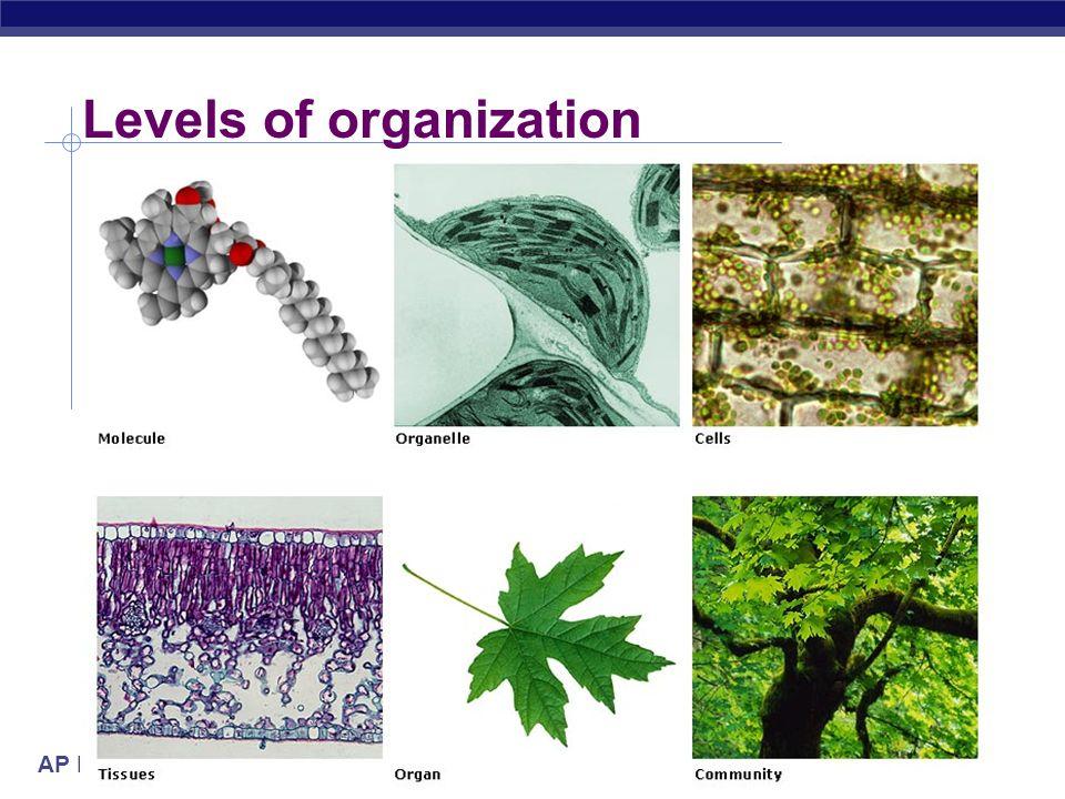 AP Biology 2005-2006 Levels of organization