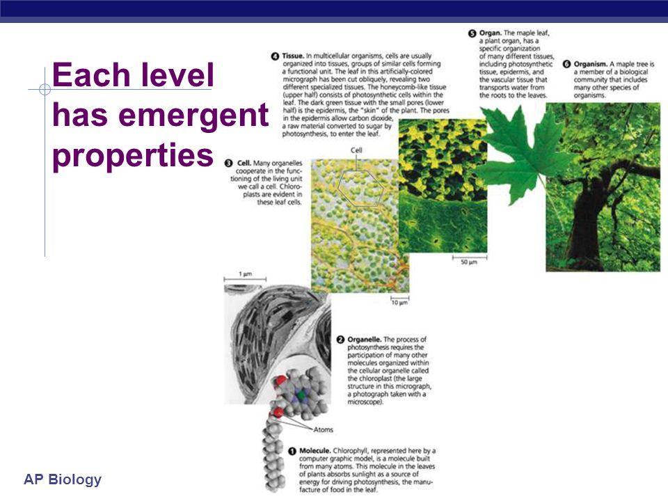 AP Biology 2005-2006 Each level has emergent properties