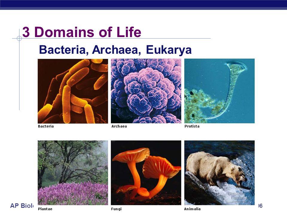 AP Biology 2005-2006 3 Domains of Life Bacteria, Archaea, Eukarya