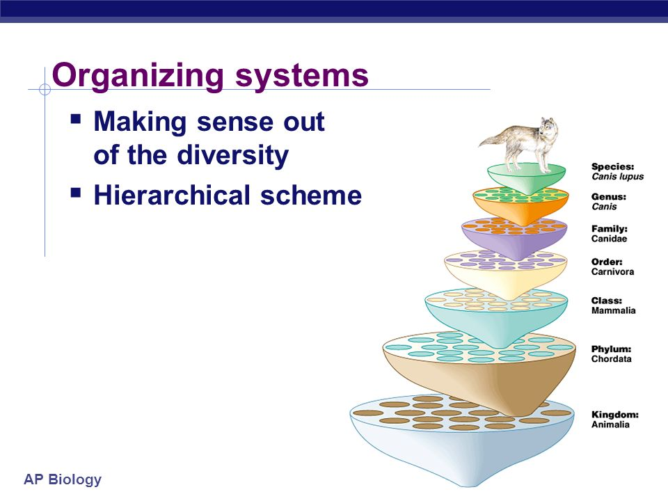 AP Biology 2005-2006 Organizing systems Making sense out of the diversity Hierarchical scheme