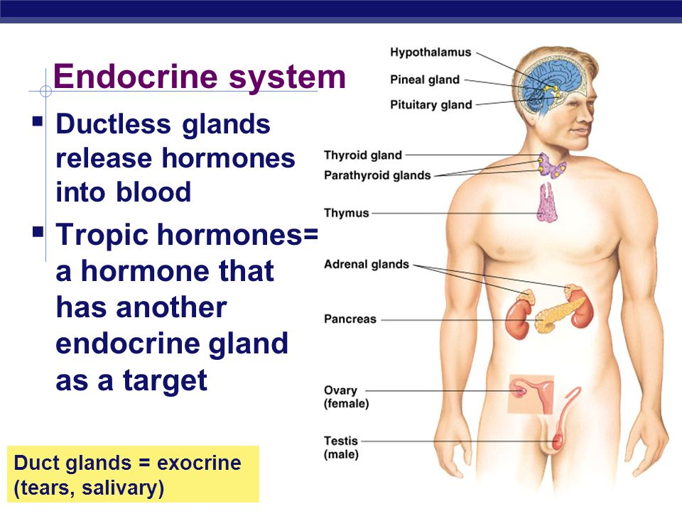 AP Biology 2004-2005 Ductless glands release hormones into blood Tropic hormones= a hormone that has another endocrine gland as a target Endocrine sys