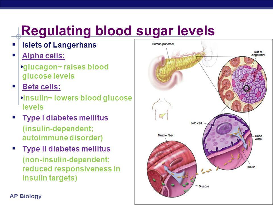 AP Biology Regulating blood sugar levels Islets of Langerhans Alpha cells: glucagon~ raises blood glucose levels Beta cells: insulin~ lowers blood glu