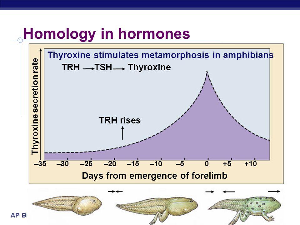 AP Biology 2004-2005 Homology in hormones Days from emergence of forelimb TRH rises TRHTSHThyroxine –35–30–25–20–15–10–50+5+10 Thyroxine secretion rat