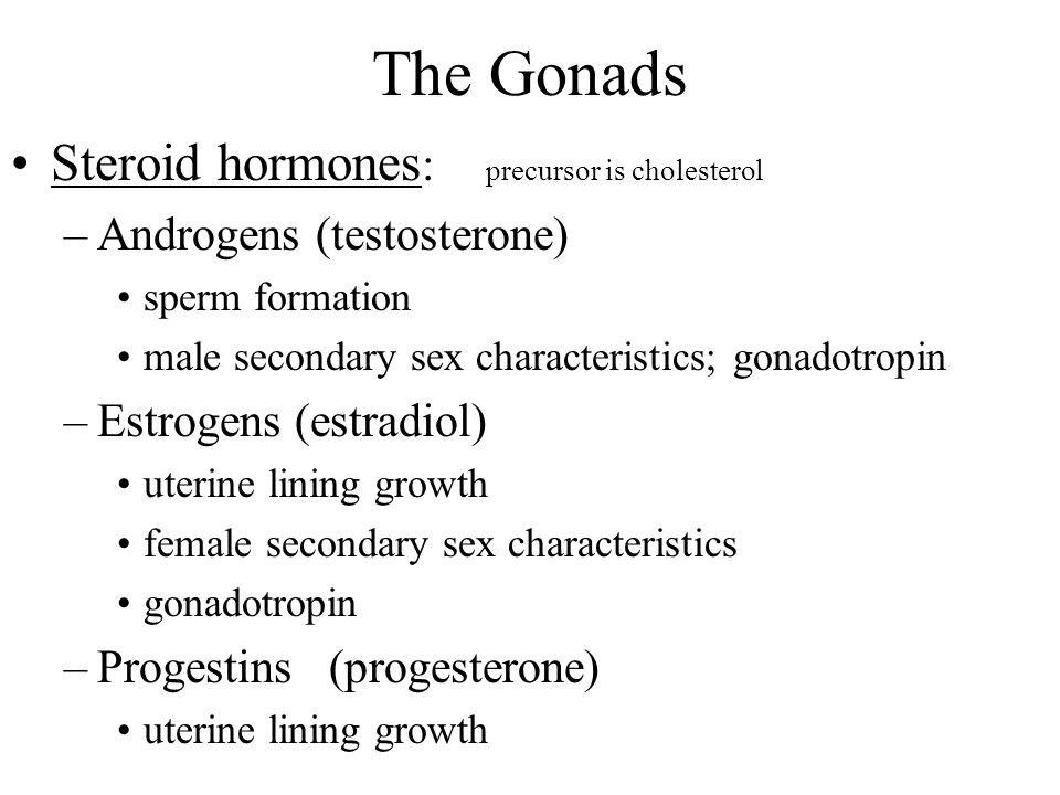 The Gonads Steroid hormones : precursor is cholesterol –Androgens (testosterone) sperm formation male secondary sex characteristics; gonadotropin –Est
