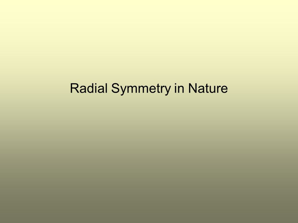 Radial Symmetry in Nature