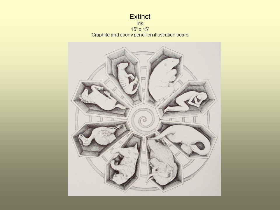 Extinct Iris 15 x 15 Graphite and ebony pencil on illustration board