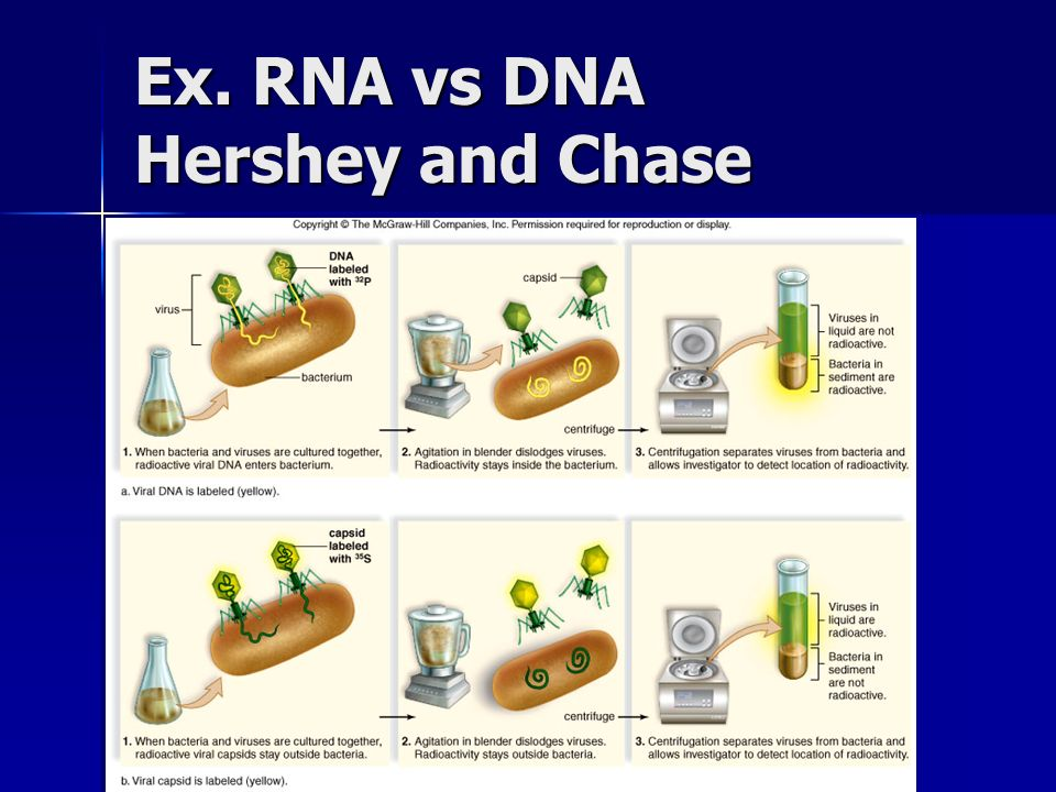 Ex. RNA vs DNA Hershey and Chase