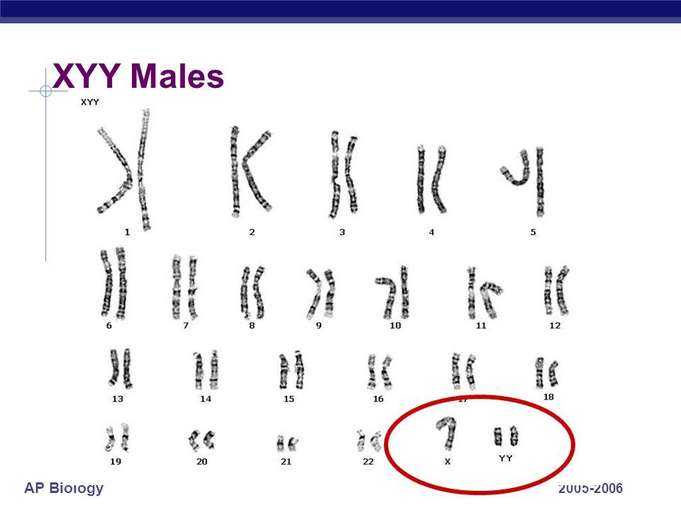 AP Biology 2005-2006 XYY Males